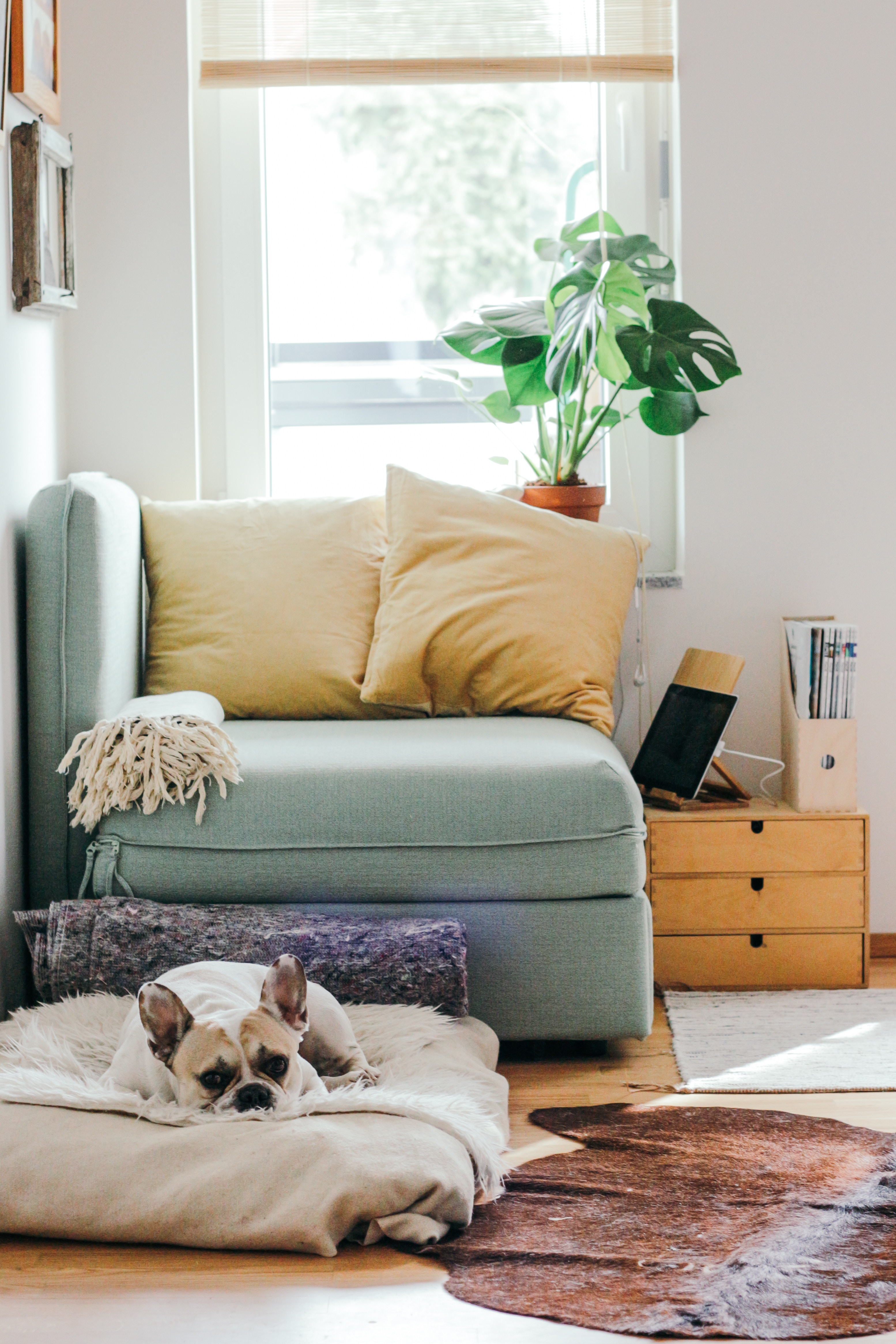 10 Easy Ways to Make Your Home Beautiful for Summer on a Budget